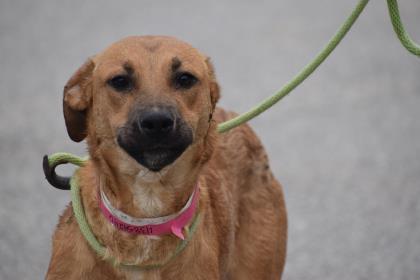 Sasha Dahlonega-Lumpkin County Humane Society