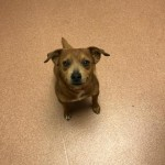 Adoptable (Official) Georgia Dogs for May 26, 2020