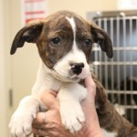 Adoptable (Official) Georgia Dogs for May 1, 2020