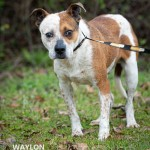 Adoptable (Official) Georgia Dogs for May 27, 2020