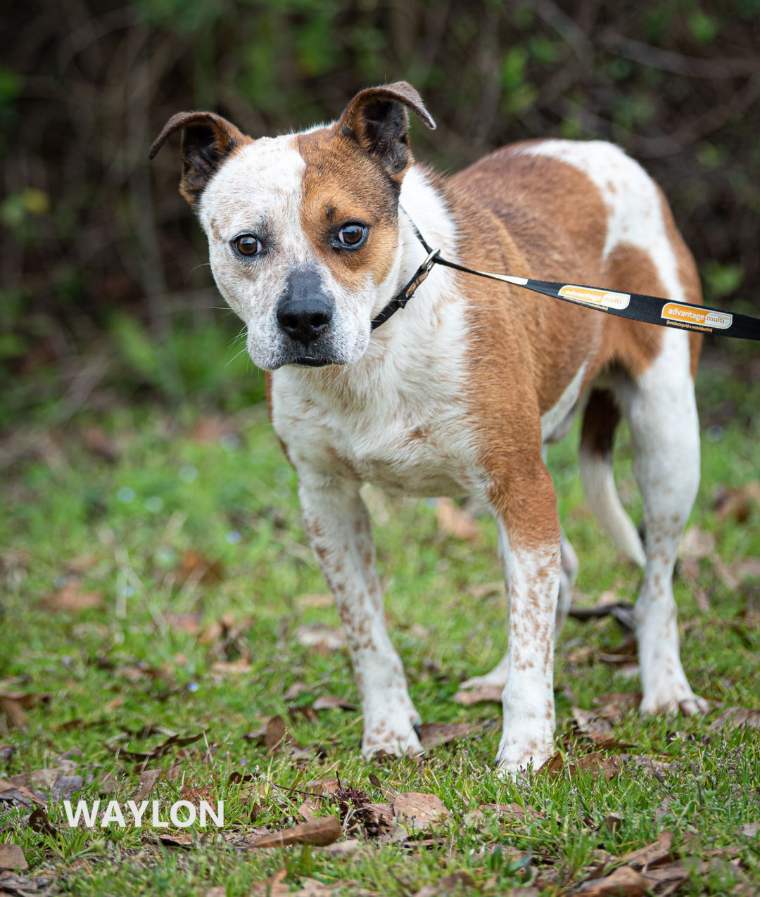 Waylon Washington Wilkes Humane Shelter