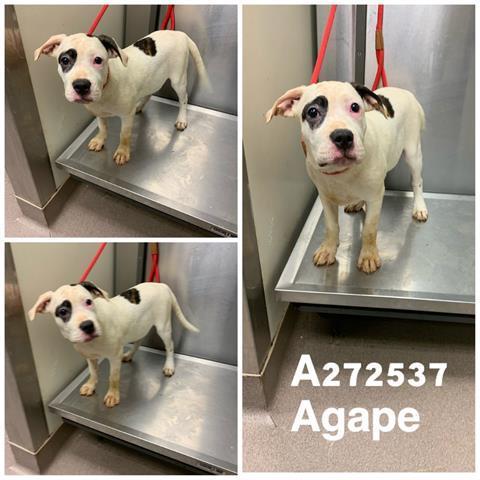 Agape Macon Bibb County Animal Welfare