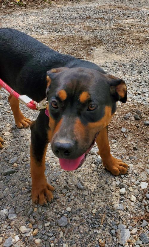 Betsy Castoff Pet Rescue Blairsville