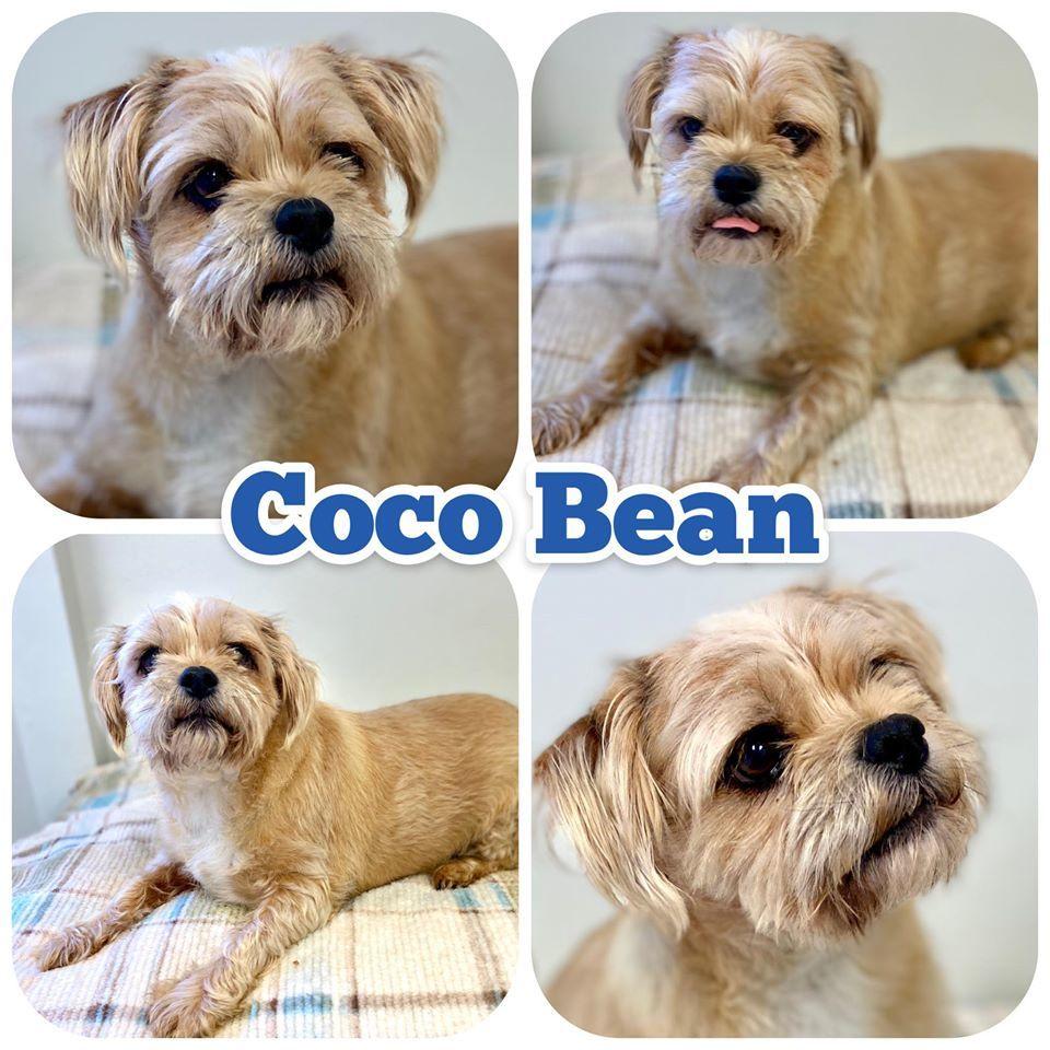 Coco Bean Etowah Valley Humane Society