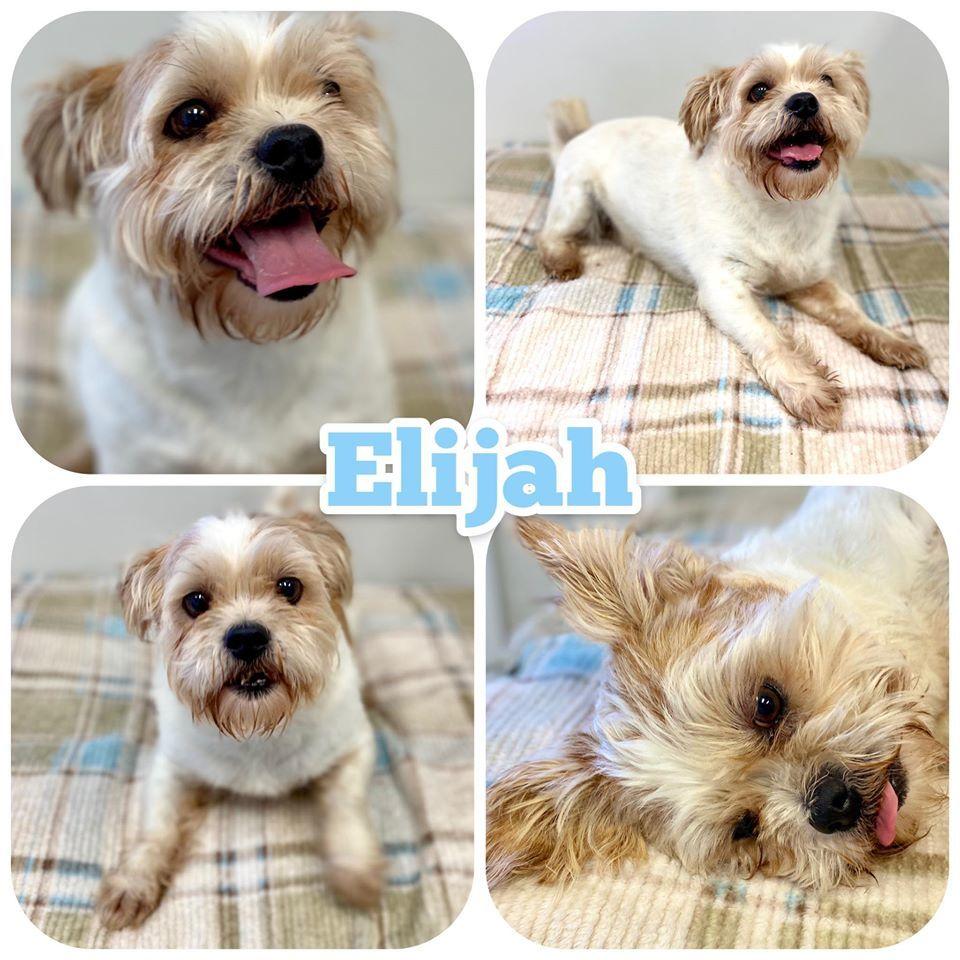 Elija Etowah Valley Humane Society