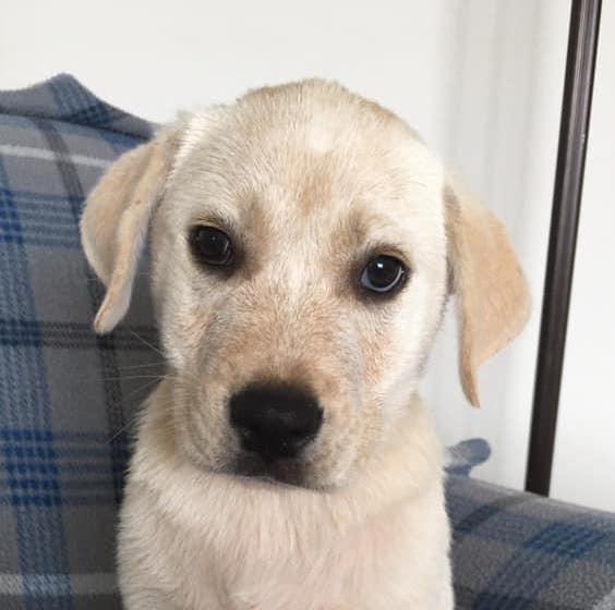 Gatsby Hero Dog Rescue