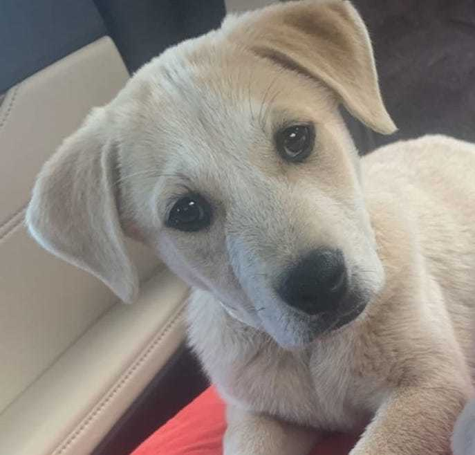 Gemini Hero Dog Rescue