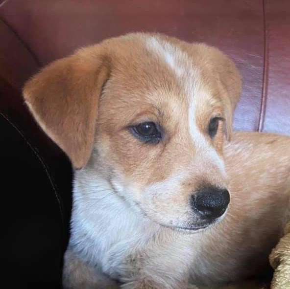 Grayson Hero Dog Rescue