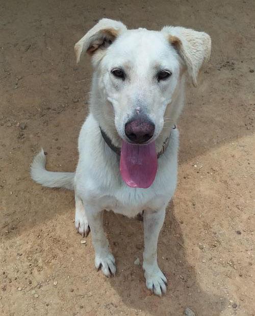 Hattie Faithful Hearts Animal Shelter Eastman GA
