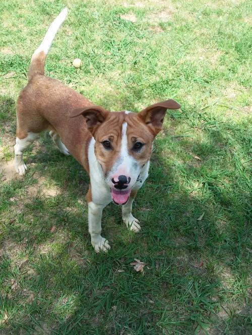 Jed Faithful Hearts Animal Shelter Eastman GA