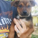 Adoptable (Official) Georgia Dogs for June 10, 2020