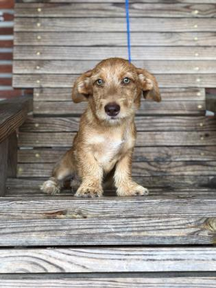 Lil Bit Moultrie Colquitt County Humane Society