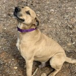 Adoptable (Official) Georgia Dogs for June 29, 2020