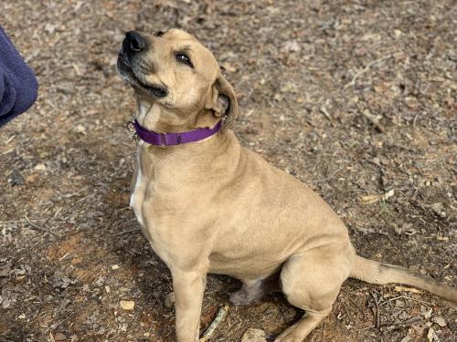 Scooby Castoff Pet Rescue Blairsville