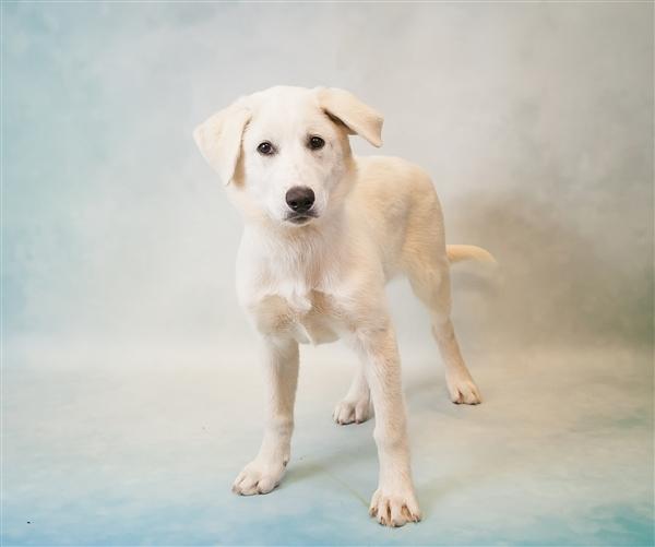 Vixen Puppy Gwinnett Animal Shelter