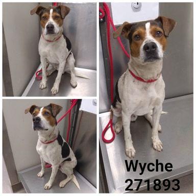 Wyche Macon Bibb County Animal Welfare