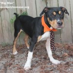 Adoptable (Official) Georgia Dogs for July 22, 2020