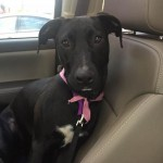 Adoptable (Official) Georgia Dogs for July 21, 2020