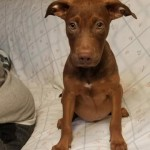 Adoptable (Official) Georgia Dogs for July 20, 2020