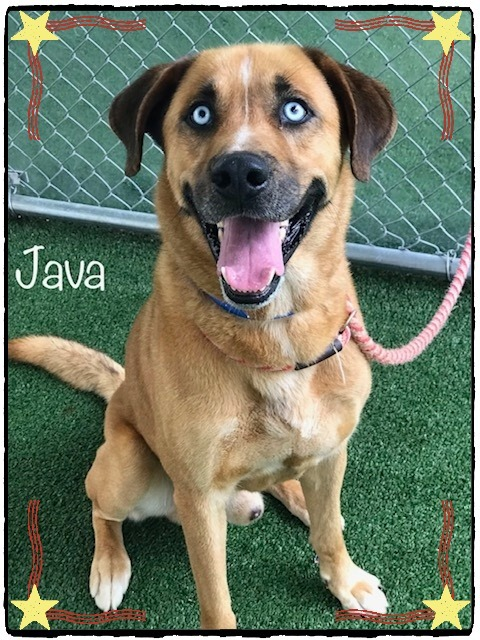 Java Cobb County Animal Shelter