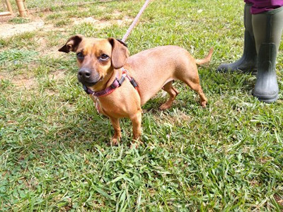 Jessie Athens Canine Rescue