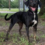 Adoptable (Official) Georgia Dogs for July 10, 2020