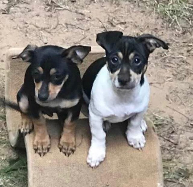 Little G and Louis Ruff Dog Rescue Milton GA