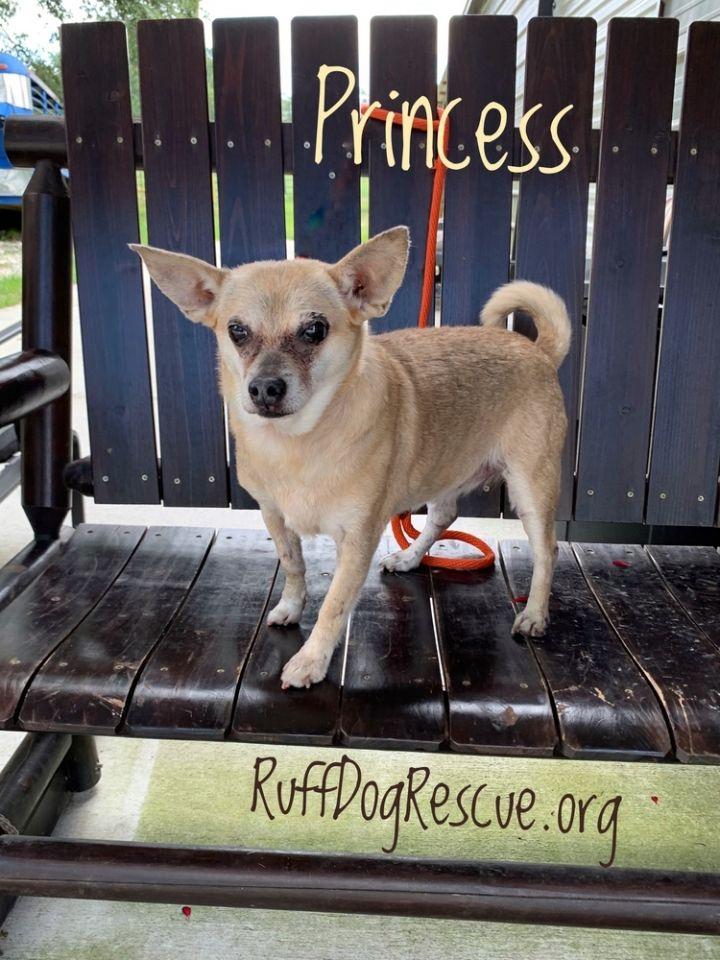 Princess Leia Ruff Dog Rescue Milton GA