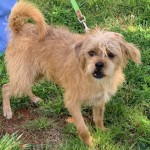 Adoptable (Official) Georgia Dogs for July 24, 2020