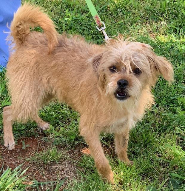Rufus Alcovy Pet Rescue