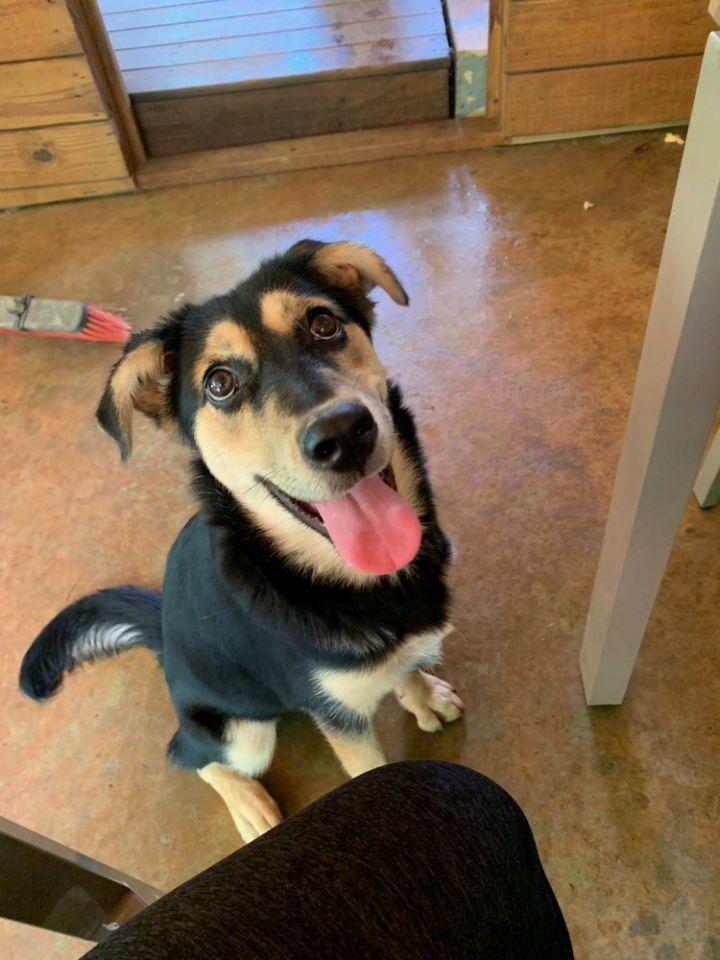 Sidney Ruff Dog Rescue Milton GA