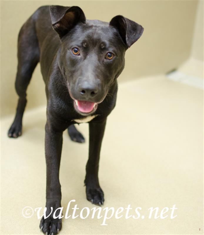 Walton Animal Control 3316998