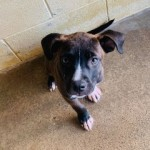 Adoptable (Official) Georgia Dogs for August 20, 2020