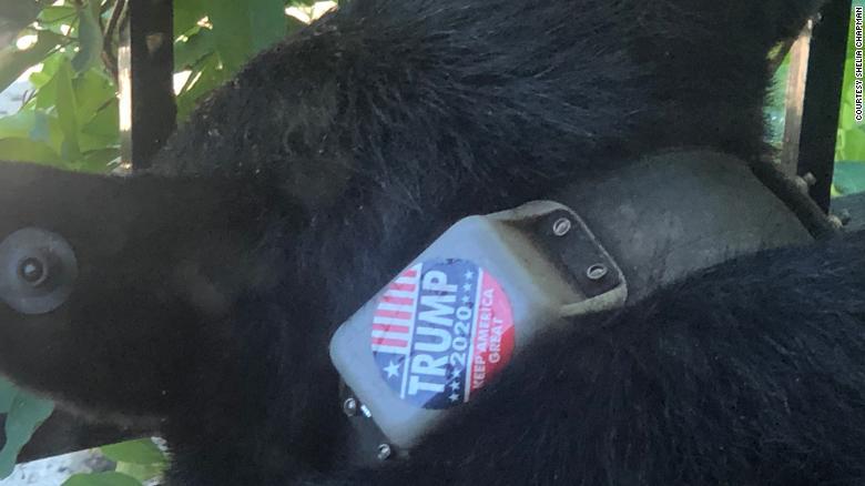Bear Trump 2020