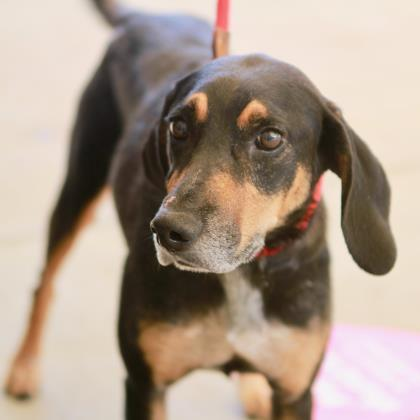 Charla Atlanta Humane Society