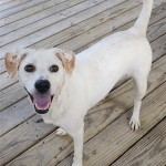 Adoptable (Official) Georgia Dogs for August 10, 2020