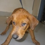 Adoptable (Official) Georgia Dogs for August 6, 2020
