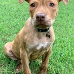 Adoptable (Official) Georgia Dogs for August 31, 2020