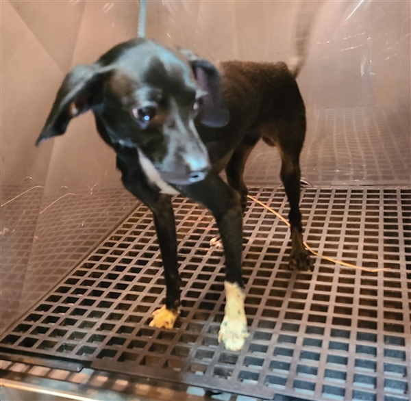Miles Gwinnett Animal Shelter