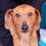 Adoptable (Official) Georgia Dogs for August 18, 2020