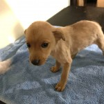 Adoptable (Official) Georgia Dogs for August 19, 2020