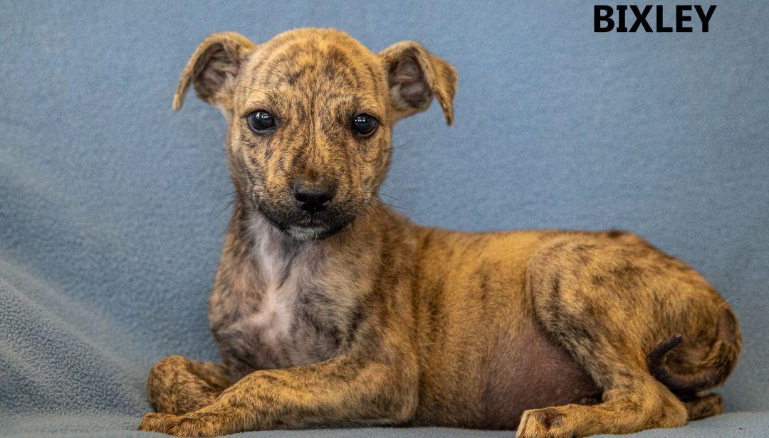 Bixley Washington Wilkes Humane Animal Shelter