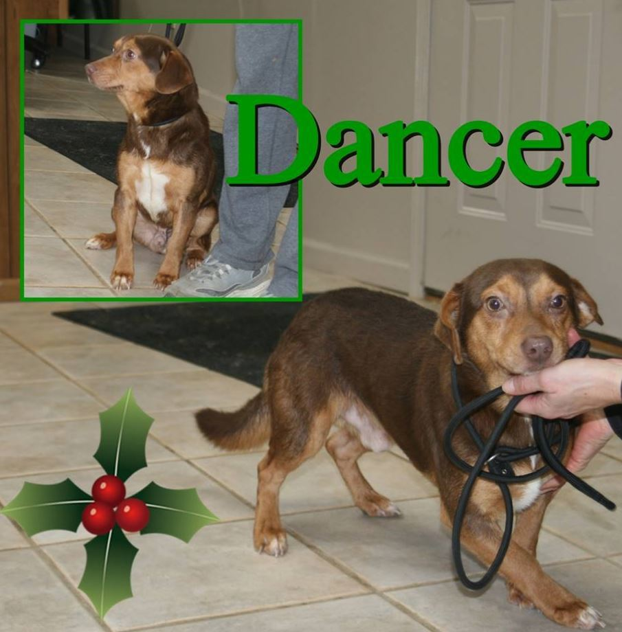 Dancer Alcovy Pet Rescue