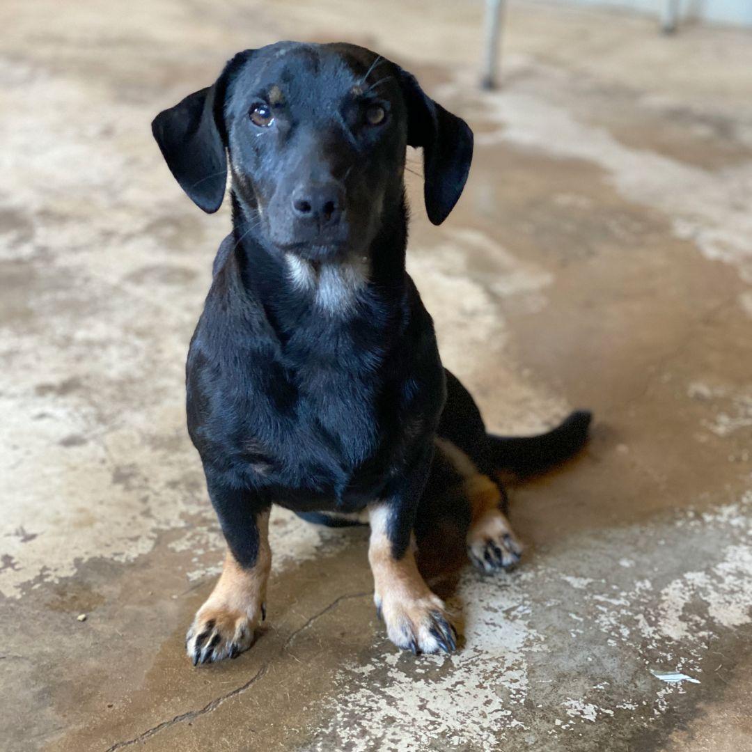 Danny DeVito Animal Rescue League NWGA