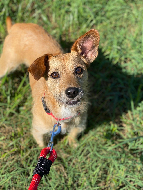 McKamey Animal Rescue League NWGA