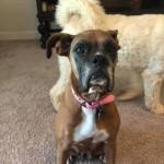 Adoptable (Official) Georgia Dogs for September 3, 2020