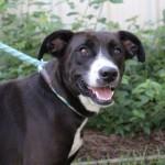 Adoptable (Official) Georgia Dogs for September 30, 2020