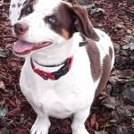 Adoptable (Official) Georgia Dogs for September 15, 2020