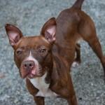 Adoptable (Official) Georgia Dogs for September 2, 2020