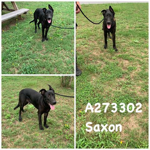 Saxon Macon Bibb Animal Welfare